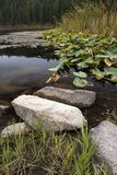 岩石和植物由岸 库存照片
