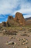 岩石和植物看法  免版税图库摄影