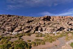 岩石和植物 免版税库存照片