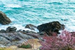 岩石和植被在海滩 库存图片