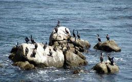 岩石和海景是美丽的在蒙特雷海湾 免版税库存图片