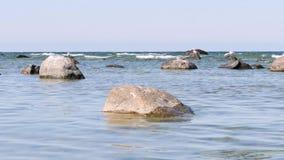 岩石和海鸥在维斯比附近的海,在哥得兰岛海岛上在瑞典 影视素材