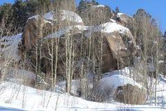 岩石和白杨木 免版税图库摄影