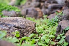 岩石和石渣 免版税图库摄影