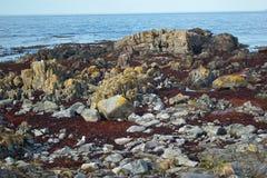 岩石和红色杂草 库存图片
