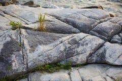岩石和草 免版税库存照片