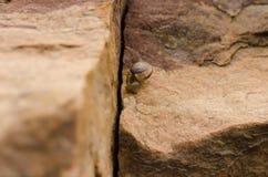 岩石和蜗牛 图库摄影