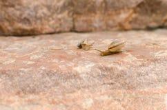 岩石和蜗牛 免版税库存照片