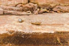 岩石和蜗牛 库存图片