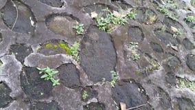 岩石和青苔 库存照片