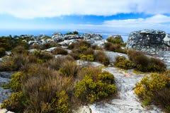 岩石和风景在桌山南Af顶部 免版税库存照片