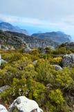 岩石和风景在桌山,开普敦顶部 库存照片