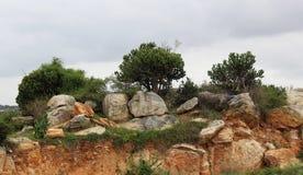 岩石和结构树 免版税库存照片
