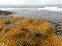 岩石和黑海 库存图片