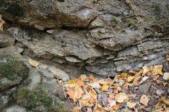 岩石和黄色叶子 库存图片