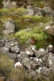 岩石和wildfowers 库存照片