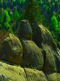 岩石在森林里 库存照片