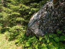 岩石在森林里 库存图片