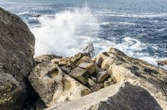 岩石在海洋 免版税图库摄影