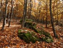 岩石在秋天叶子覆盖的森林里  库存照片