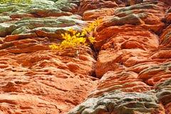 岩石在达恩洛克兰在德国 图库摄影