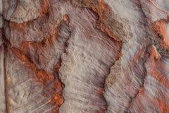 岩石在petra陷下约旦nabatean城市 库存图片