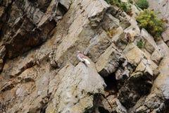 岩石在Tanby,威尔士,英国 库存图片