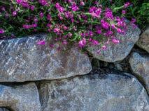 岩石墙壁有花背景 免版税库存图片