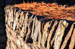 岩石墙壁的特写镜头有太阳放置在上面的光亮和棕色松树针的 免版税库存照片