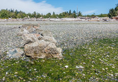 岩石处于低潮中 免版税库存照片