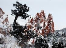 岩石天空结构树 免版税库存图片