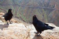 岩石小山的居民 免版税库存照片