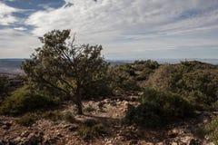 从岩石小山的看法与绿色树 库存图片