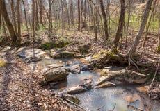 岩石小河在密集的森林里 免版税图库摄影