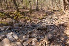 岩石小河在密集的森林里 库存图片