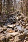 岩石小河在密集的森林里 免版税库存图片