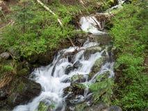 岩石小河通过森林 库存照片