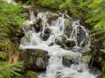 岩石小河通过森林 免版税库存图片