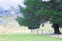 岩石山和大树 免版税图库摄影