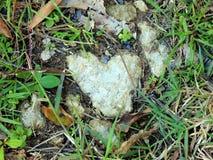 岩石心脏 库存图片