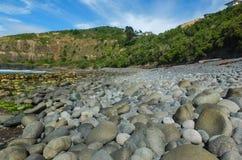 岩石新西兰海滩 库存照片