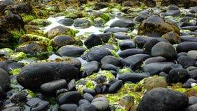 岩石新西兰海滩 库存图片