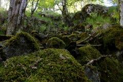 岩石森林地在挪威 库存照片