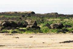 岩石植被 库存照片