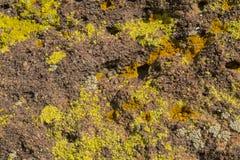岩石沙漠海藻城市 免版税库存图片