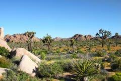 岩石沙漠的横向 图库摄影