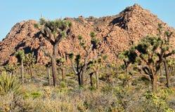 岩石沙漠的横向 免版税库存图片