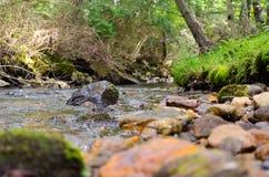 岩石河场面在森林里 库存照片