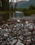 岩石河床的河 库存图片