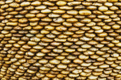 岩石河褐色 免版税库存图片